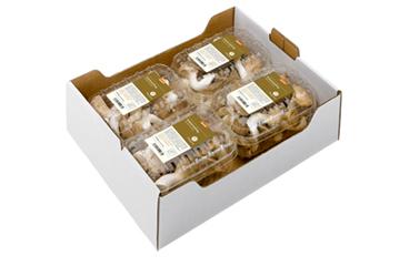 4 x 200g Kräuterseitlinge in PLA-Schalen mit Umkarton